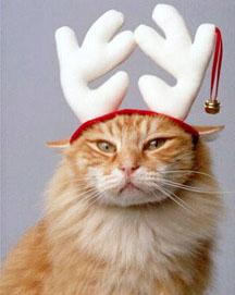 Christmas Hater.Bookworm S Book Shelf A Christmas Hater